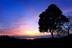 Soluppgång bak tree Royaltyfri Bild