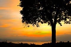 Soluppgång bak tree Royaltyfri Fotografi