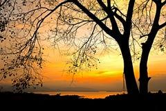 Soluppgång bak tree Fotografering för Bildbyråer