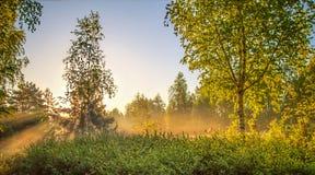 Soluppgång Björkdunge i den mistSpring naturen för morgon Landskap arkivfoton