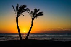 Soluppgång bland palmträd Arkivbild