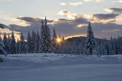 Soluppgång bland tallar Fotografering för Bildbyråer