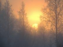 Soluppgång December Sverige Arkivfoto