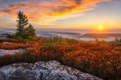 Soluppgång Dolly Sods, West Virginia Arkivbilder