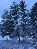 Soluppgång efter en snöstorm Arkivfoto