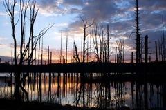 soluppgång för fördämninggästgivargårdshaggers Fotografering för Bildbyråer