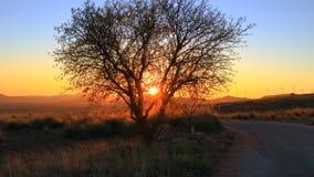 Soluppgång för mandelträd Arkivbild