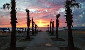 Soluppgång för sandig strand för palmträd Royaltyfri Fotografi