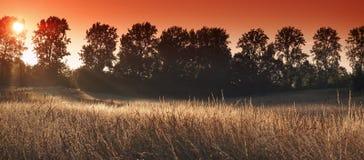 Soluppgång för vetefält i Frankrike Arkivbilder
