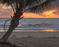 Soluppgång fyra mil strand, Port Douglas, QLD, Australien Arkivbilder