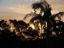 Soluppgång i Australien till och med träden Arkivbild