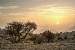 Soluppgång i bergen med träd Royaltyfri Bild