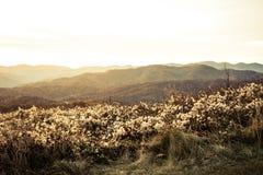 Soluppgång i blåa Ridge Mountains i North Carolina arkivfoto