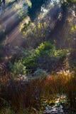 Soluppgång i busken Arkivbild
