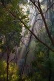 Soluppgång i busken II Royaltyfri Fotografi