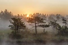 Soluppgång i den dimmiga myren under sommar arkivbild