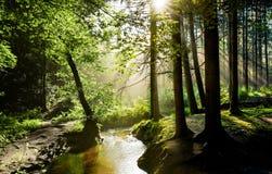 Soluppgång i en dimmig skog i Tyskland arkivfoton