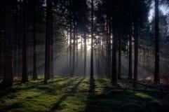 Soluppgång i en skog arkivfoto