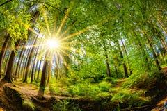 Soluppgång i en skog med bäcken royaltyfri fotografi