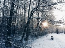 Soluppgång i en tyst vinterskog Royaltyfri Foto