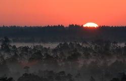Soluppgång i estländsk myr Arkivfoton