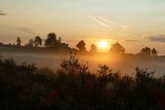 Soluppgång i ett fält av ljung Arkivbild