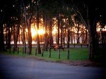Soluppgång i lokal parkerar arkivbilder