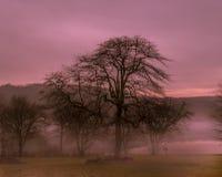 Soluppgång i misten fotografering för bildbyråer