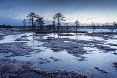 Soluppgång i myren Iskallt kallt träsk Frostig jordning Träsk sjö och natur Frysningtemperaturer i hed Blått kärr arkivbild
