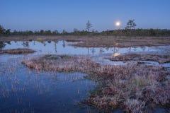 Soluppgång i myren Iskallt kallt träsk Frostig jordning Träsk sjö och natur Frysningtemperaturer i hed Muskeg naturlig miljö royaltyfria bilder