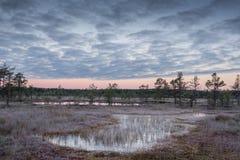 Soluppgång i myren Iskallt kallt träsk Frostig jordning Träsk sjö och natur Frysningtemperaturer i hed Muskeg naturlig miljö royaltyfri foto