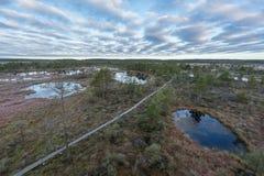 Soluppgång i myren Iskallt kallt träsk Frostig jordning Träsk sjö och natur Frysningtemperaturer i hed Muskeg naturlig miljö fotografering för bildbyråer