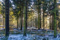 Soluppgång i otta i skogen med den ljusa solstrålen royaltyfri fotografi
