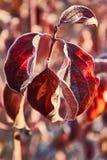 Soluppgång i rött Royaltyfri Fotografi