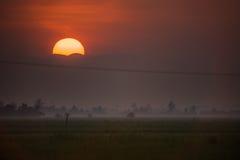 Soluppgång i risfältfält Arkivbild