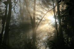 Soluppgång i skog Royaltyfri Bild