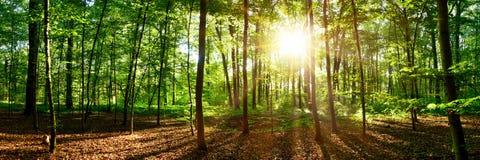 Soluppgång i skogen royaltyfria bilder