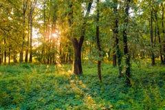 Soluppgång i skogen Royaltyfria Foton