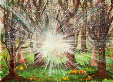 Soluppgång i skogen Arkivfoto