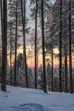 Soluppgång i skogen av nordliga Finland Royaltyfri Foto