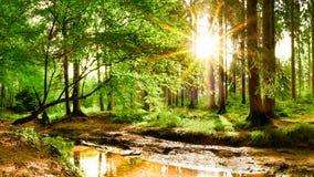 Soluppgång i skogen med bäcken arkivfoton