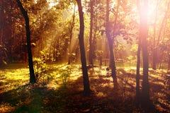 Soluppgång i skogen med ljusa axlar och skuggor Royaltyfria Bilder