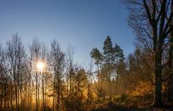 Soluppgång i trän Fotografering för Bildbyråer