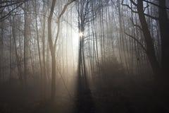 Soluppgång i träna Arkivbilder