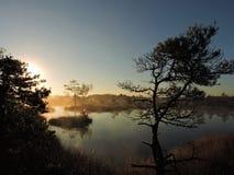 Soluppgång i träsk nära sjön, Litauen arkivfoto