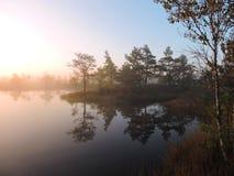 Soluppgång i träsk nära sjön, Litauen arkivfoton