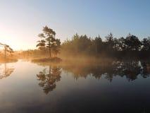 Soluppgång i träsk nära sjön, Litauen royaltyfri bild
