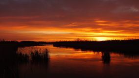 Soluppgång i våtmarkerna arkivbild