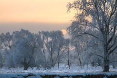 Soluppgång i vinter Royaltyfria Foton