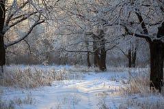 Soluppgång i vinter Arkivfoton